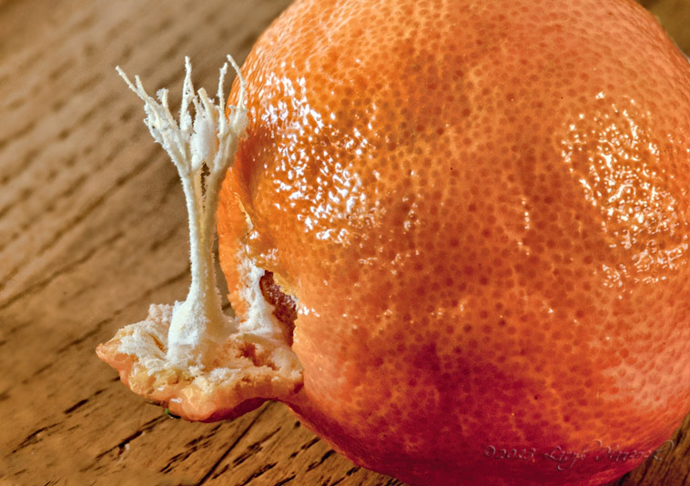 the inside of an orange