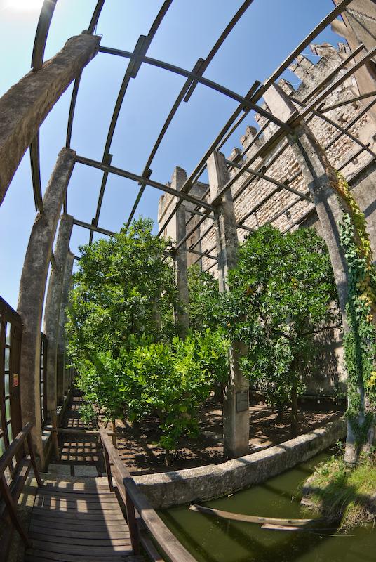 Citrus gardens at the castle