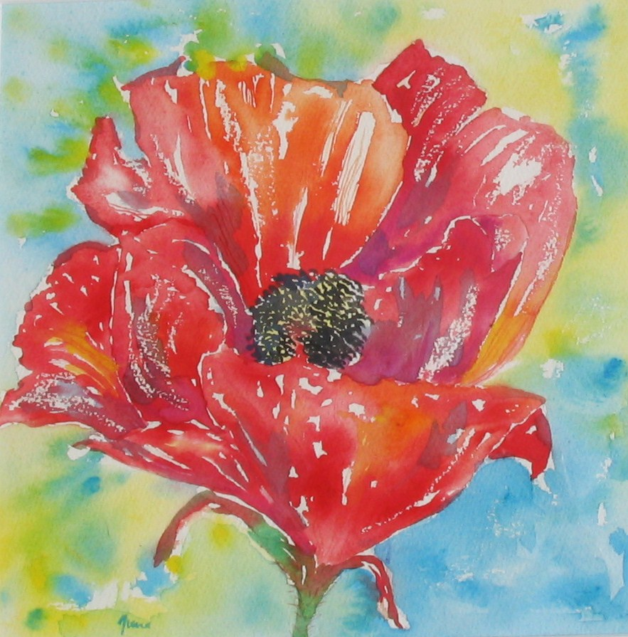 Single Poppy £195 inc mount & frame