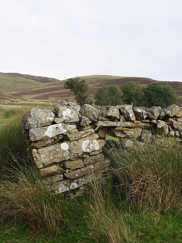 The Leaning Wall of Dolau