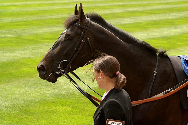 Horse Prior to Race Royal Ascot.