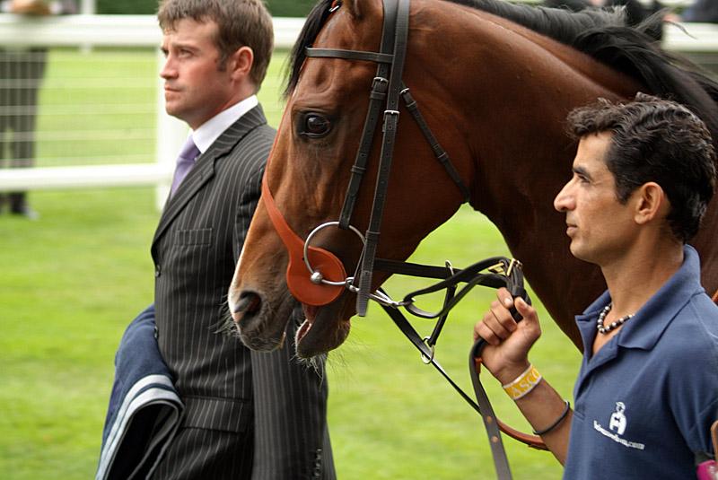 Horse Before Race Royal Ascot 03