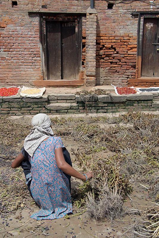 Woman Drying Peas Bhaktapur