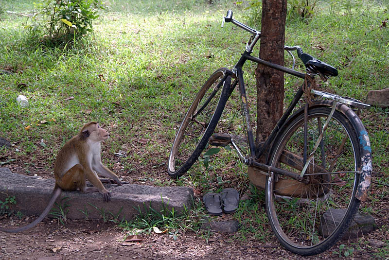 Monkey and Bike Polonnaruwa