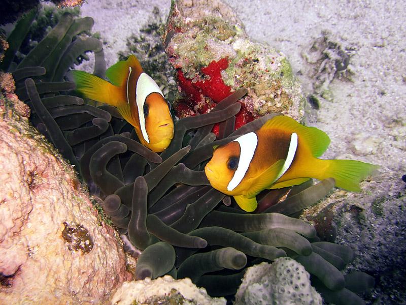 Nemo Times Two