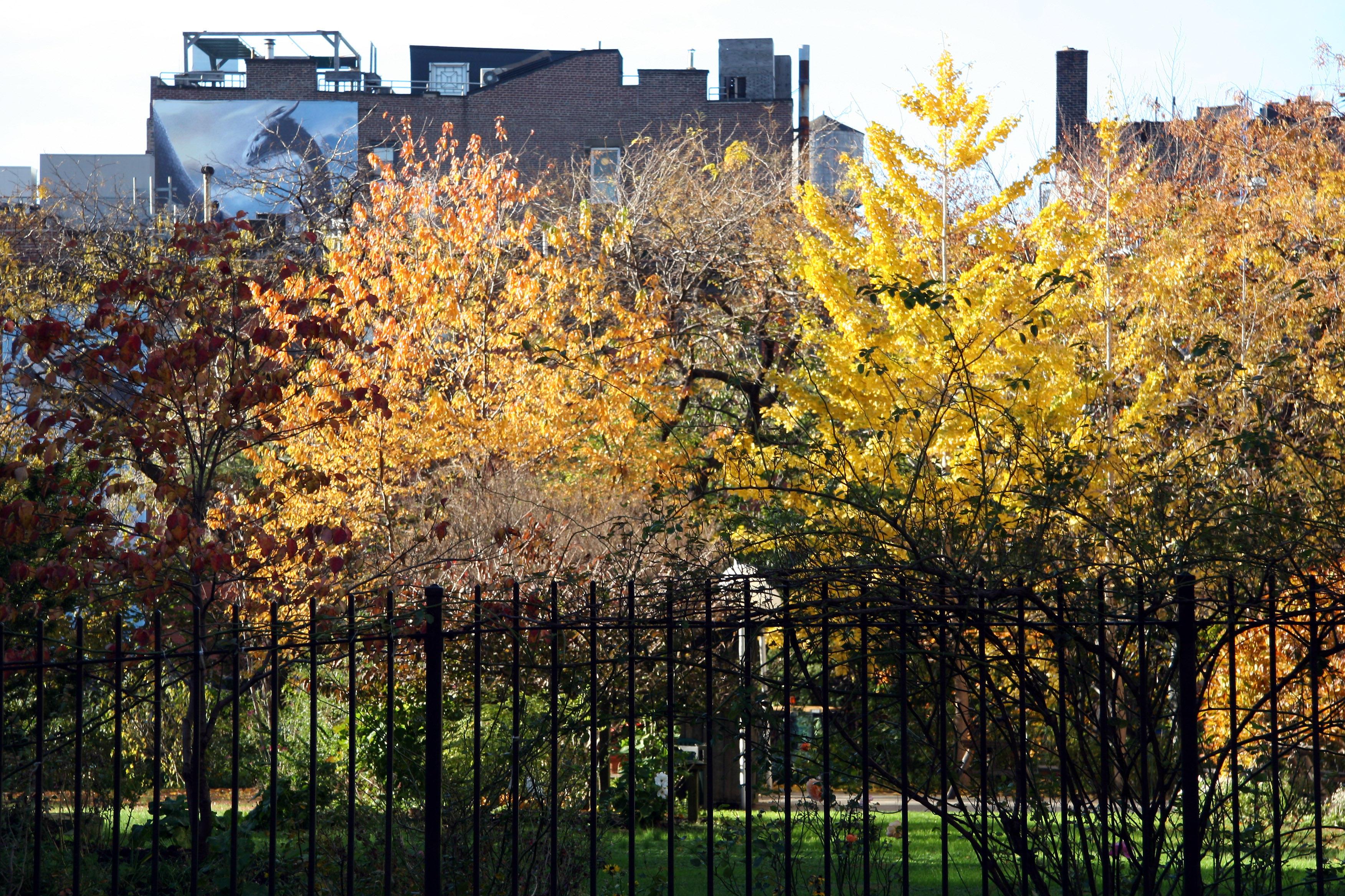 Garden View - Cherry & Ginkgo Tree Foliage