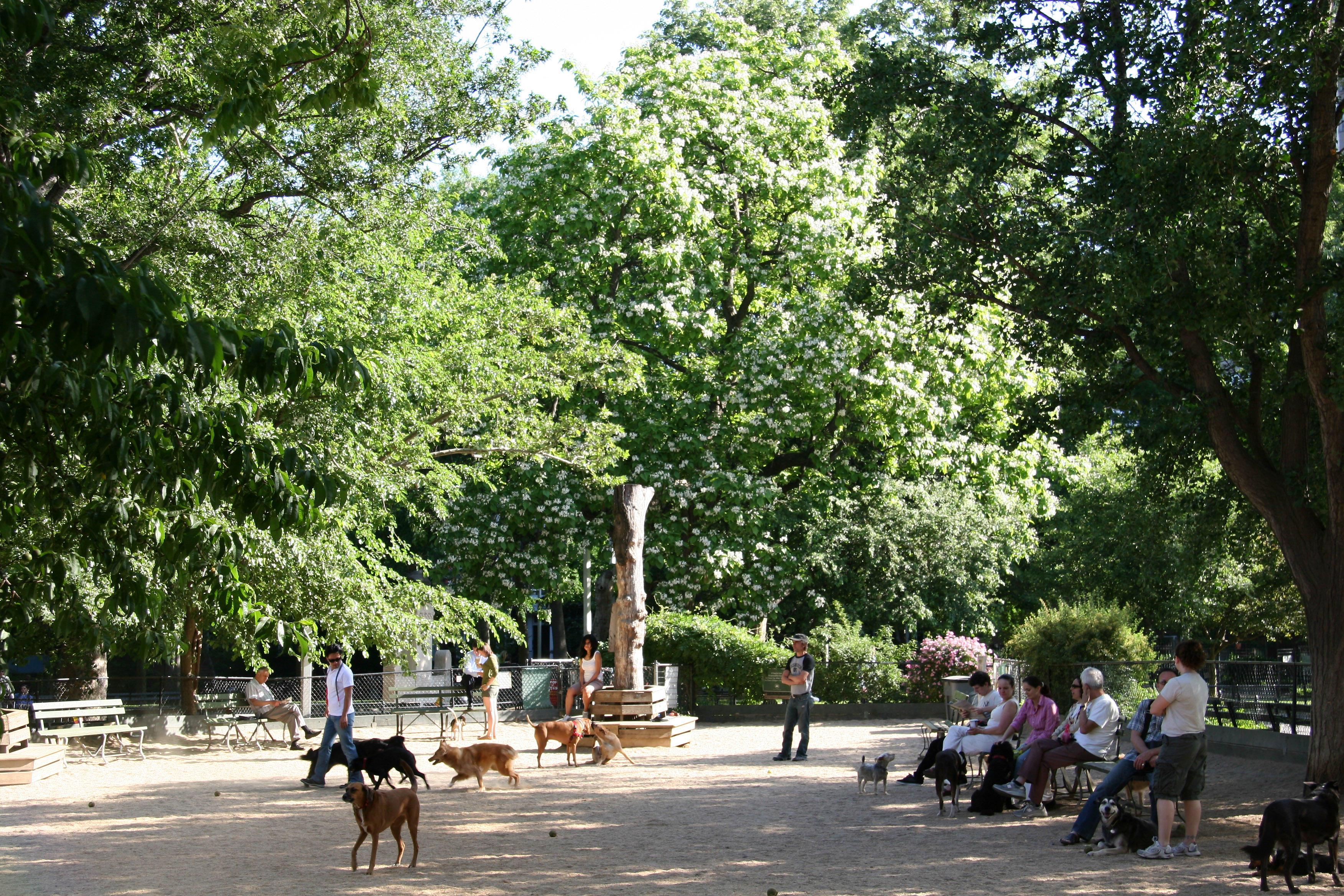 Dog Run with Catalpa Tree in Bloom