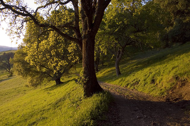 Spring Tree 1small.jpg