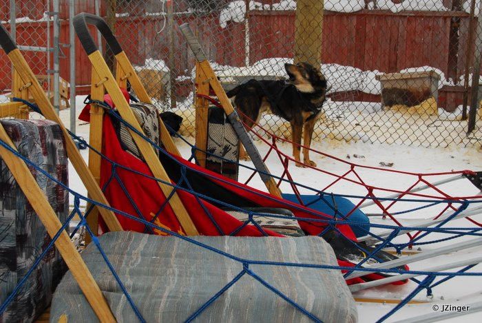 Dog Sledding, Yellowknife