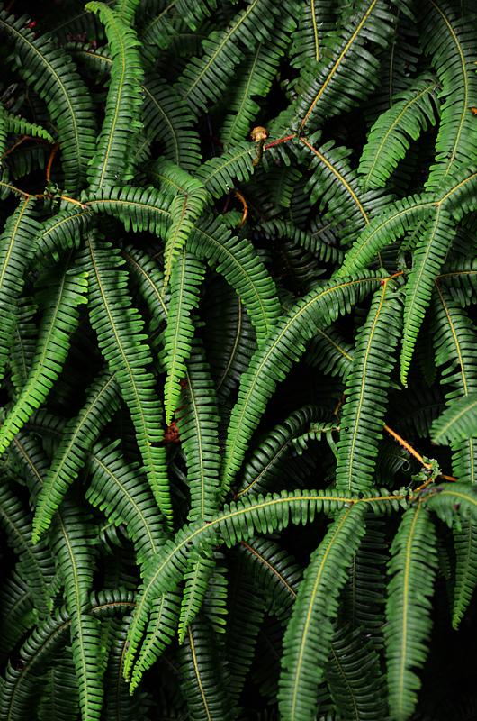 Feb122012_6842 fern forest bolivia.jpg
