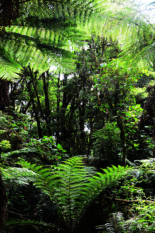 Feb122012_6920 fern forest bolivia.jpg