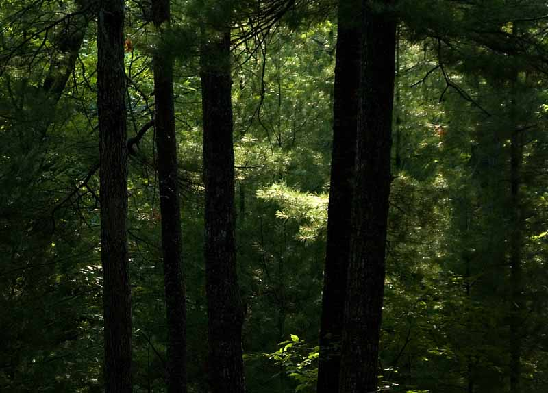 IMG, North Woods, 25.jpg