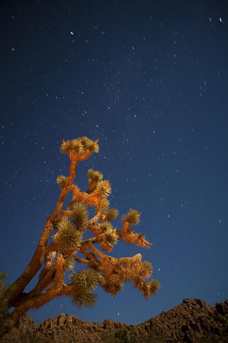 Starry August Night