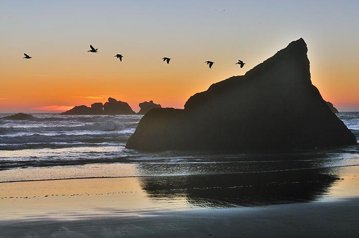 Pelicans over Bandon Beach