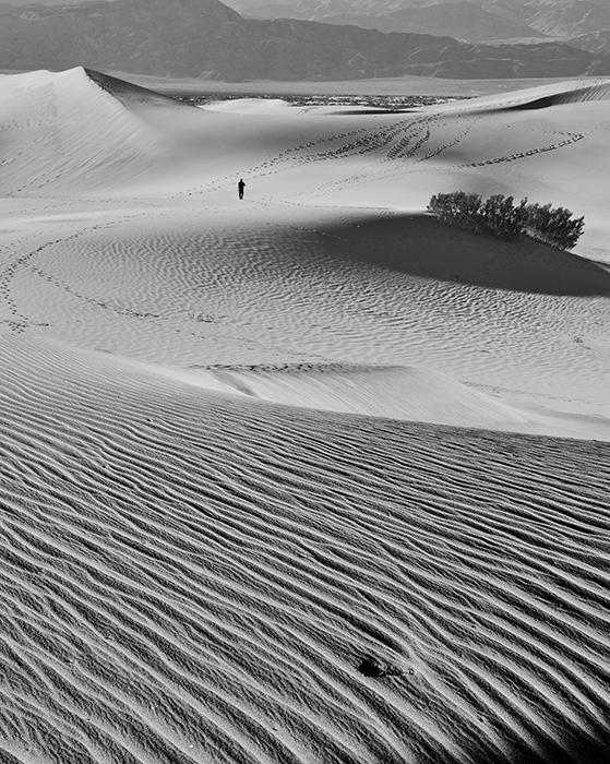DuneWalkerBW.jpg