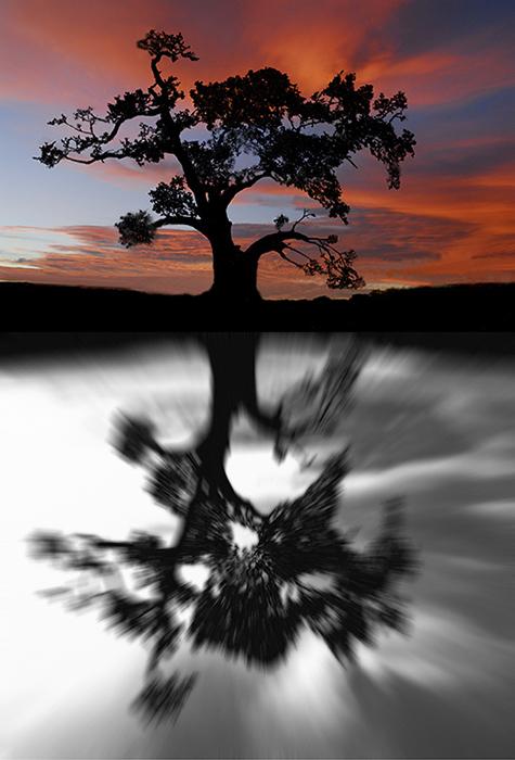 Oak Reflection