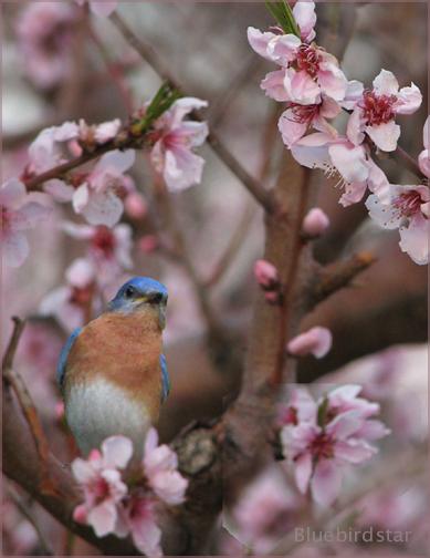 Daydreaming of Bluebirds