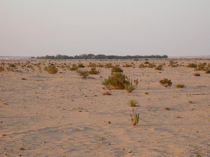 Qatbithotellet sett från oasen