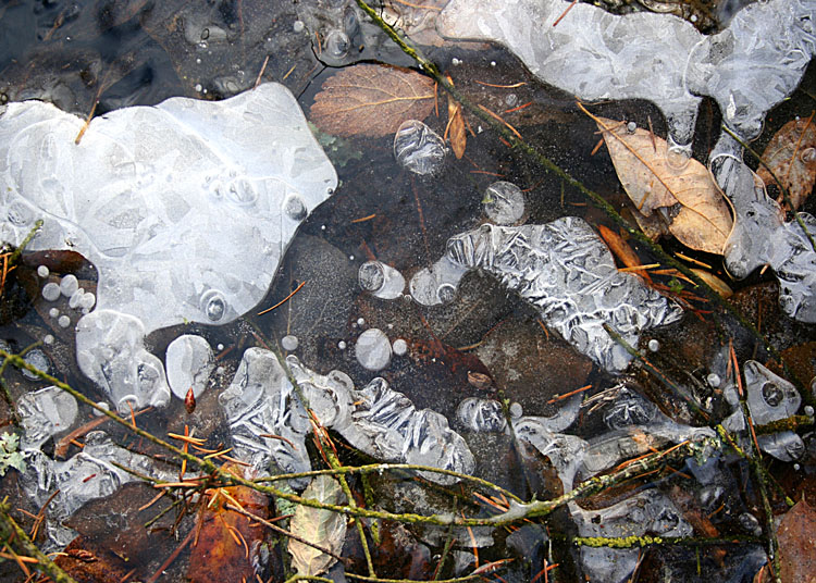 Ice and Leaves