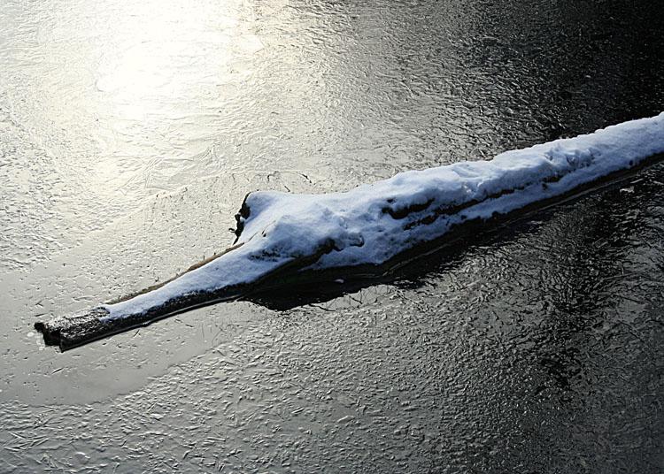 Snowy Log, or....