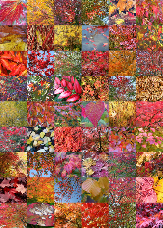 7 fall quilt
