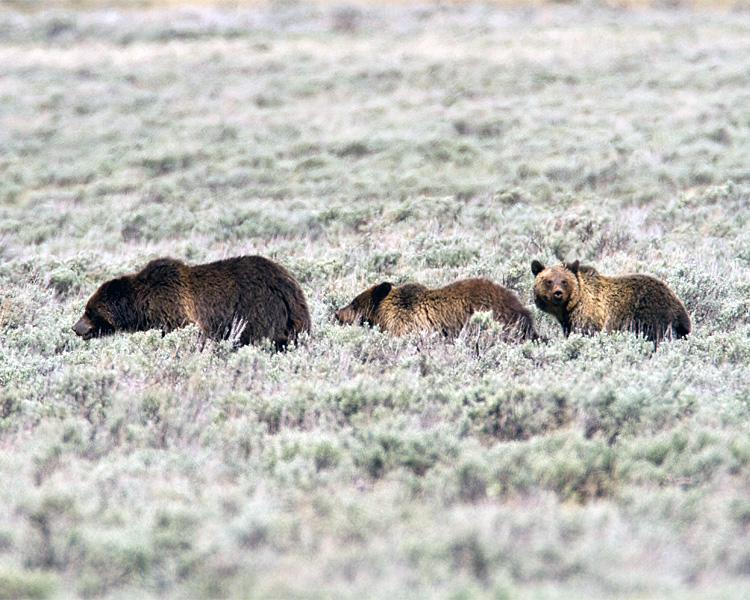 Quad Mom with Cubs at Swan Lake Flats.jpg