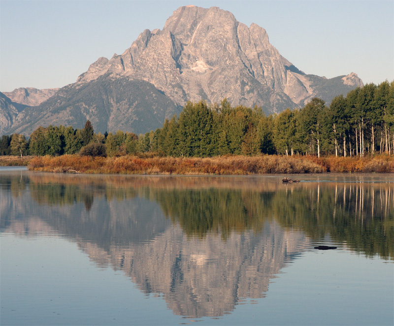 Moose Crossing Ox Bow Bend.jpg