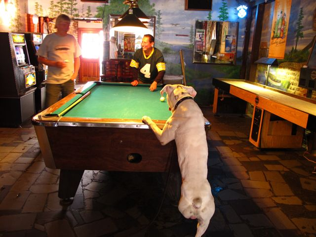resident three legged pool playing dog photo karl r josker rh pbase com 3 legged dog new orleans menu Three-Legged Dog New Orleans Bar