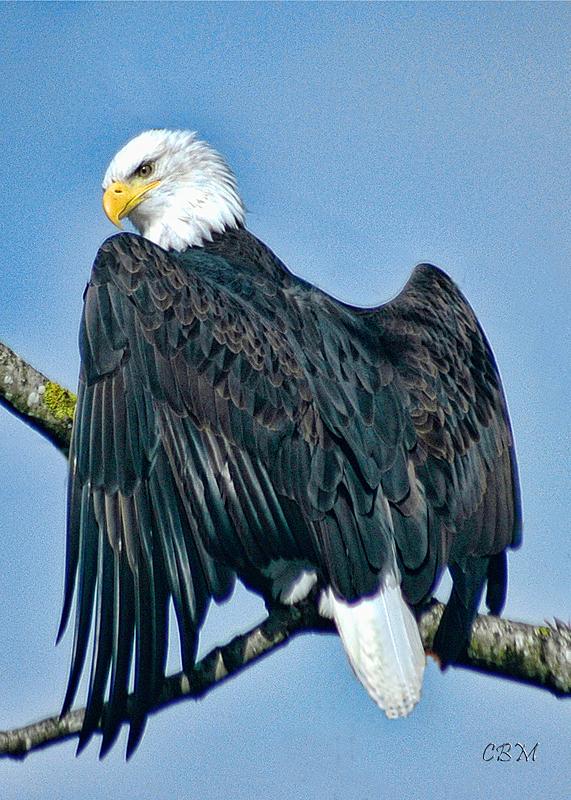 Eagle Eye !