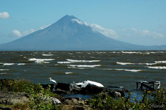 Egret at Lago Nicaragua