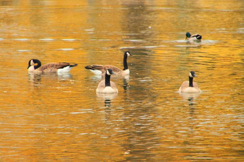 Sunset, Brittingham Park, Lake Monona, Madison