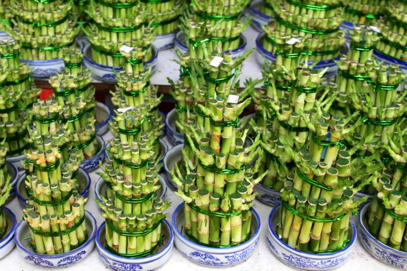Bamboo, Flower Market, Mong Kok, Hong Kong