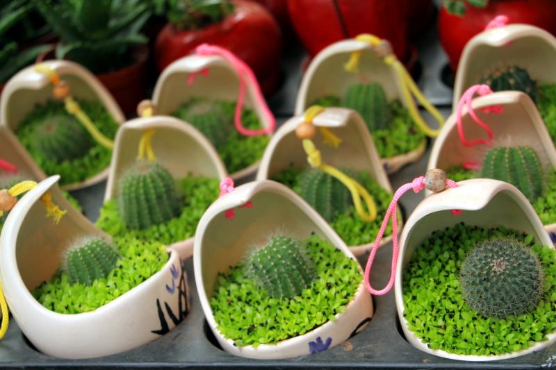 Cactus, Flower Market, Mong Kok, Hong Kong