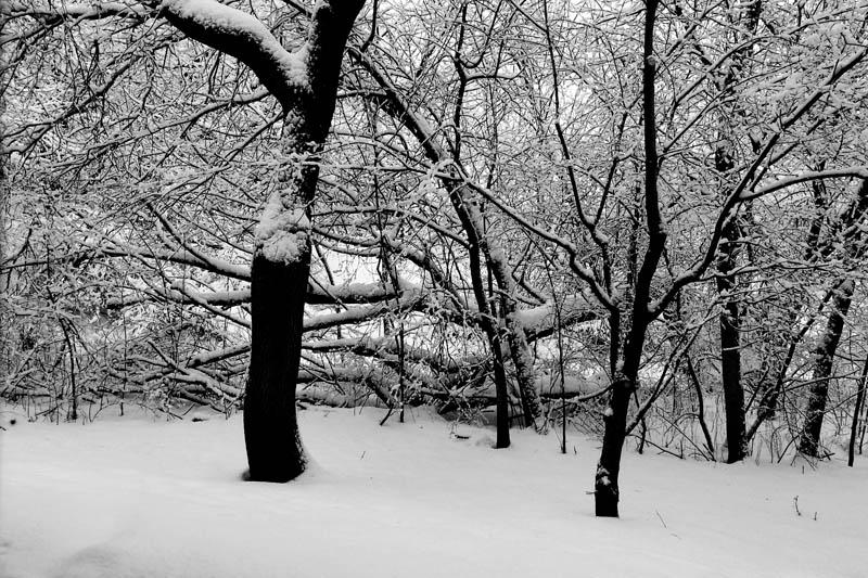 Winter 2013, Palatine, IL