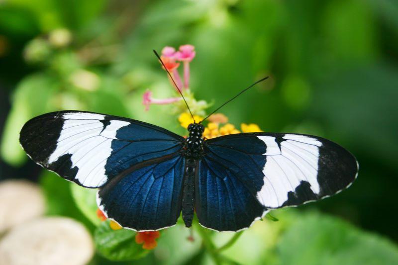 Butterfly: Blue beauty