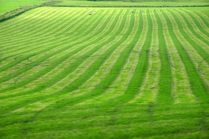 Farm lands, Orkney Islands, Scotland