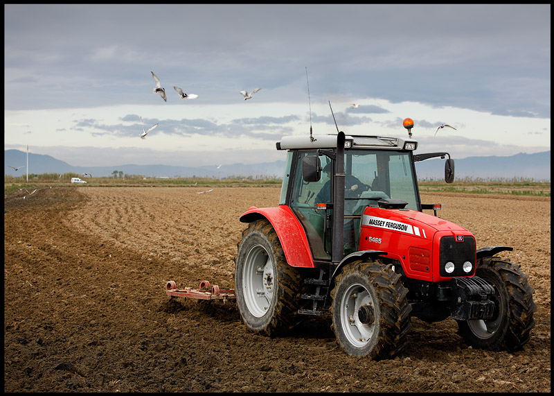 Tractor with Whiskered Terns