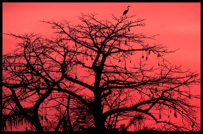 Heron in late sunset