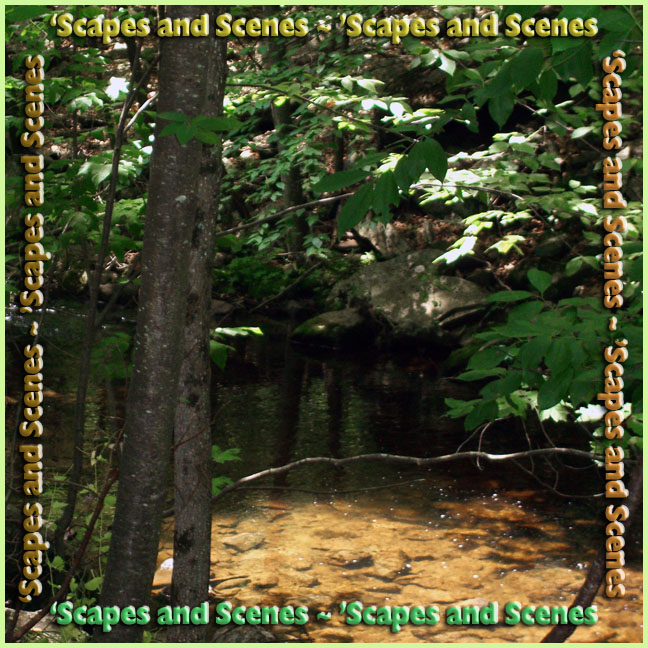 Scapes and Scenes