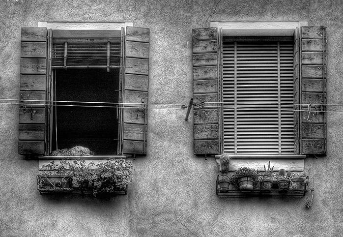 Venice-Dog.jpg