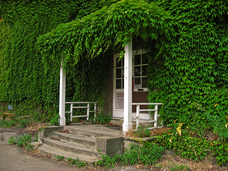 Vine covered abandoned office building, different view .. 4846