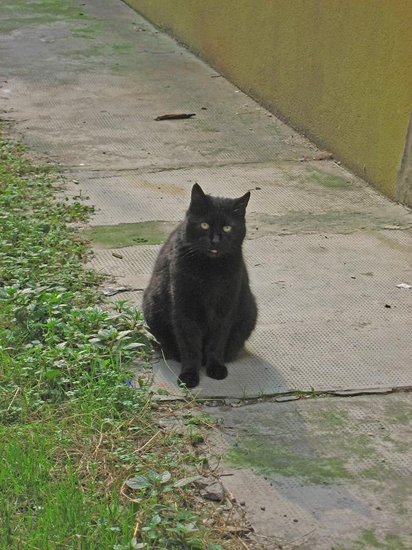 Santa Croce cat .. 2827