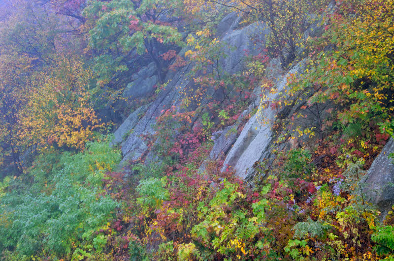 11/30/09 - Mountainside