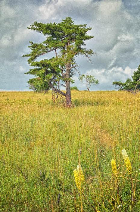 07/14/11 - Lonesome Pine