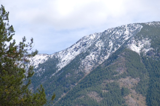 zP1020128 Mountain trees - tripod - large aperture.jpg