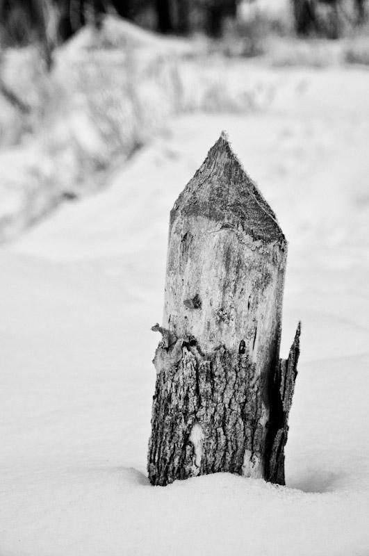 Beaver Remnants