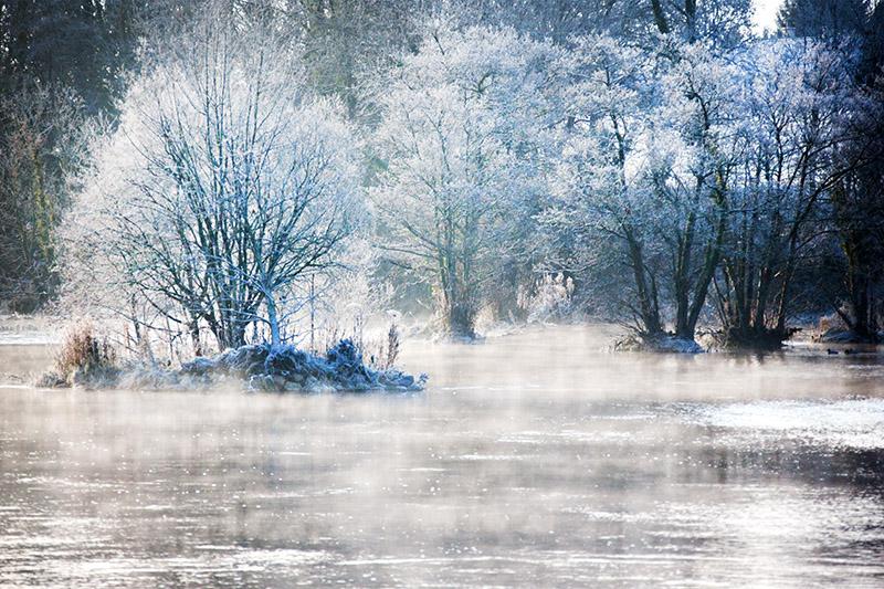Frosty Morning 2