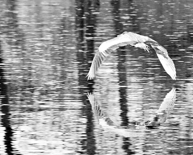 Heron Reflections