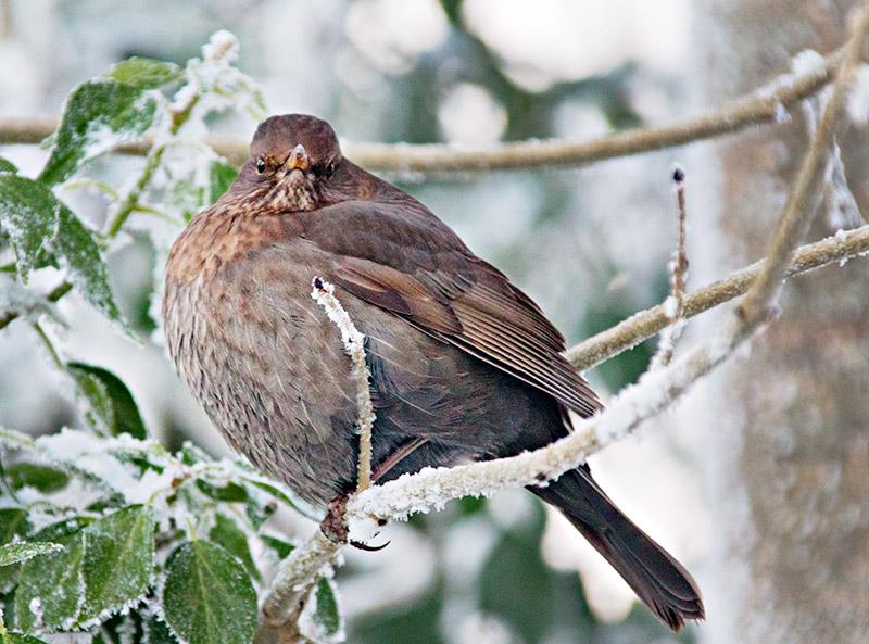 Cool Christmas Bird