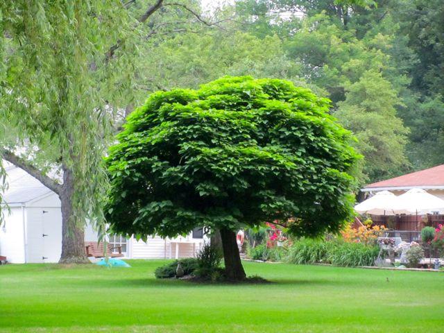 the tree speaks